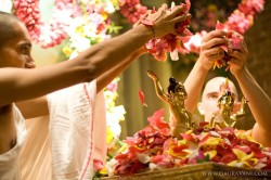 Flower bathing of Doyal Nitai and Vijay Gauranga